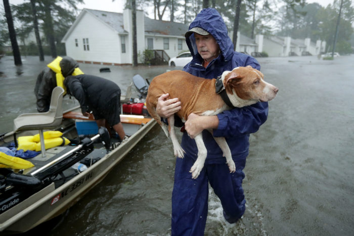 Hurricanes and Pets